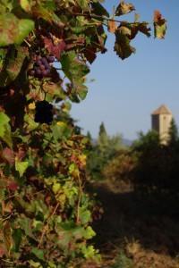 Poblet monastery Trepat wine country